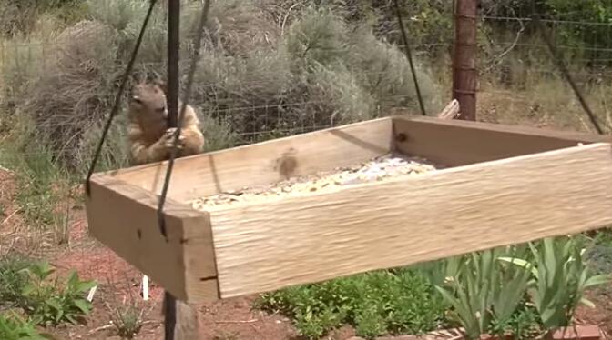 你猜不到的松鼠偷吃鸟食的防范策略