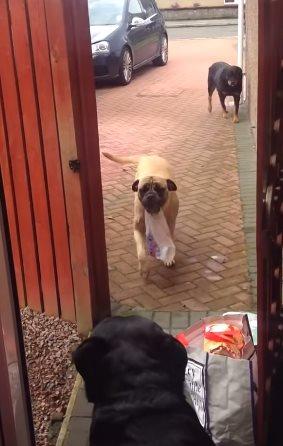 神一般的狗帮助主人拎购物袋