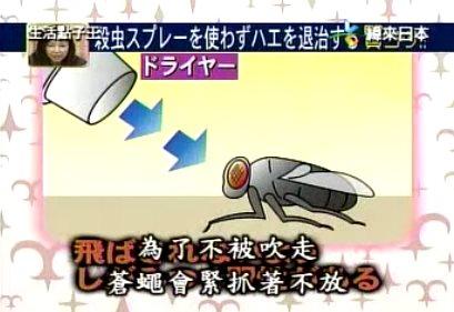 吹风机能够定苍蝇,你知道吗?