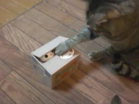 萌萌哒!当猫咪遭遇猫咪存钱罐...