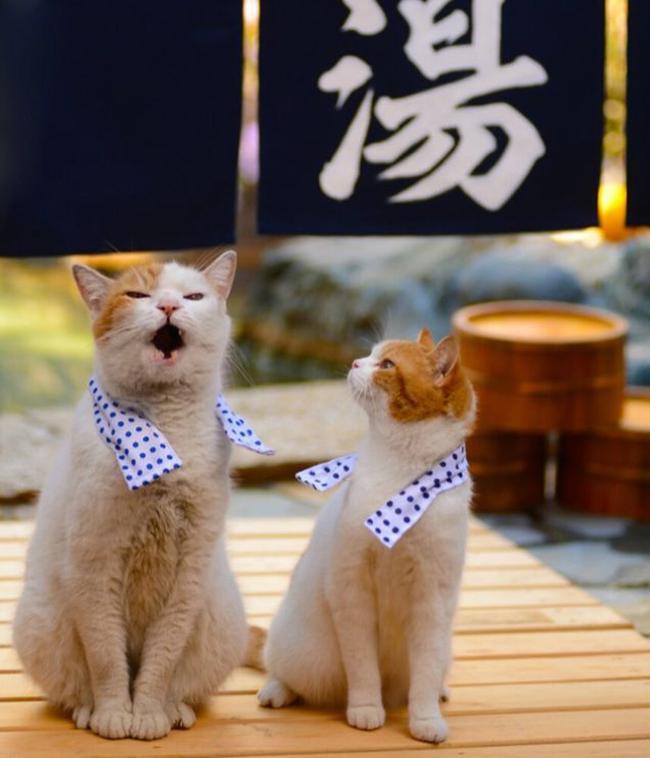 想去日本旅行吗?喵星人告诉你那是什么样的风景