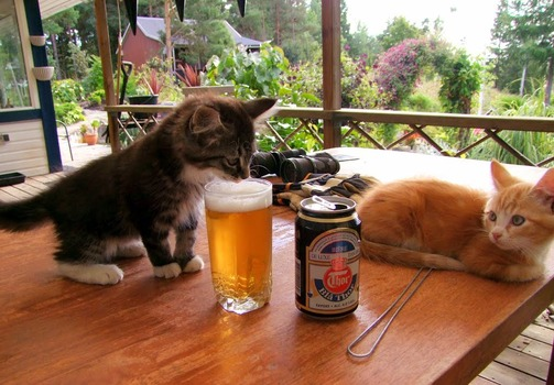 2ch翻译:这只猫到底在干什么啊?www
