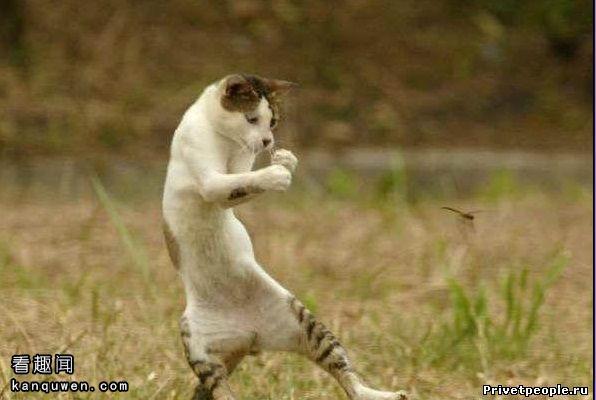 『多图』2ch翻译:人类就是为了抚摸猫咪而出生的!
