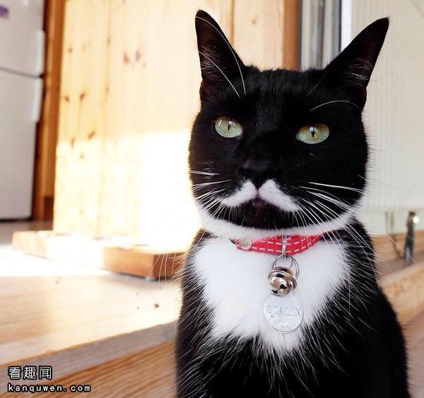 2ch翻译:这只猫摆架子也要有个限度吧