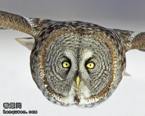2ch:这只鸟好像是真实存在的噢