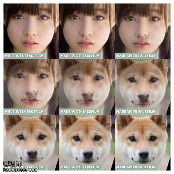 桥本环奈化为狗的变化图