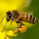 2ch:没能成功交尾的蜜蜂的下场www
