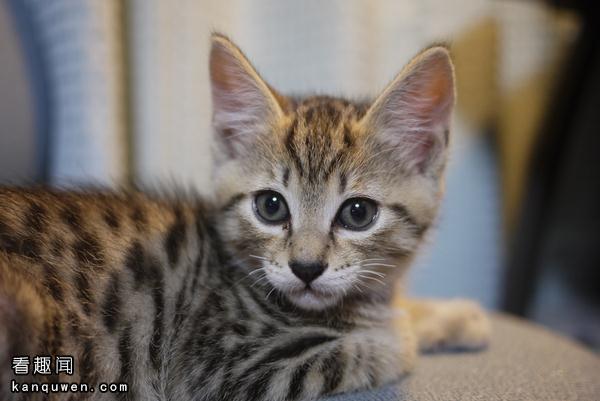 2ch:领养猫后人生变得好快乐www