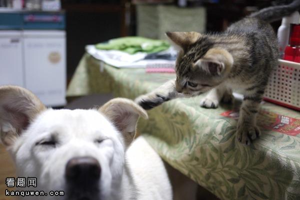 摸狗狗耳朵的猫猫
