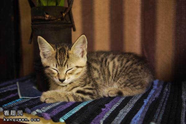 刚收养的猫第二天