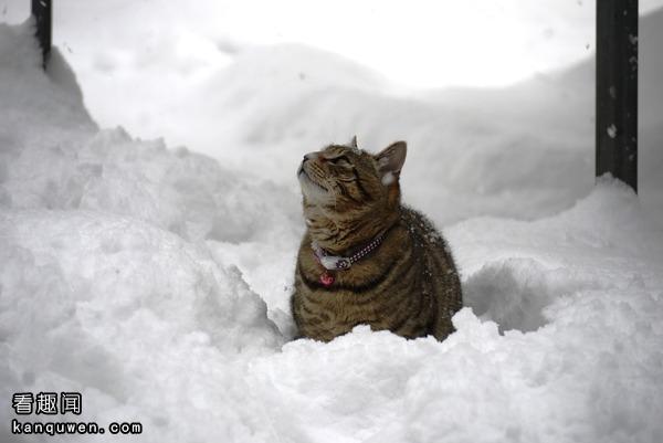 猫狗在雪地里玩耍