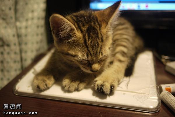 在笔记本上睡觉的猫
