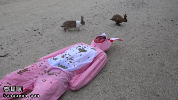 rocketnews24:在兔岛全身撒满兔粮躺下的结果www