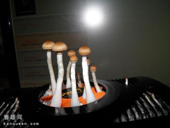 显卡长蘑菇
