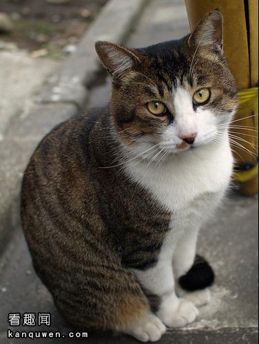 2ch:世界第一可爱动物决定战!!!