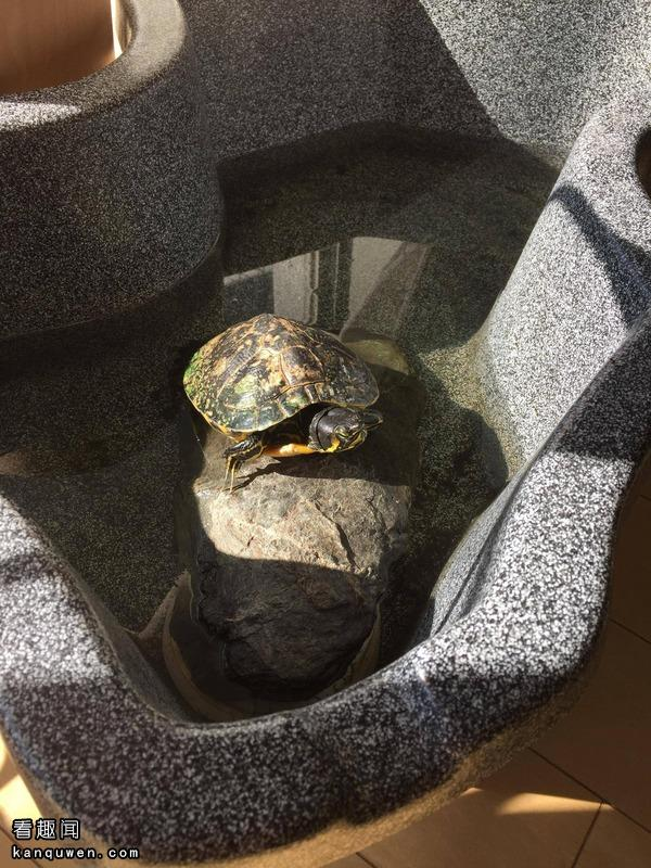 2ch:女大学生,将自己养的龟冰镇