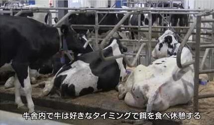 2ch:奶农导入全自动挤奶机器人→母牛们主动跑到机器人跟前排队榨乳