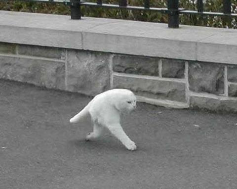 2ch:冲击!谷歌街景拍到了「2足步行的猫」
