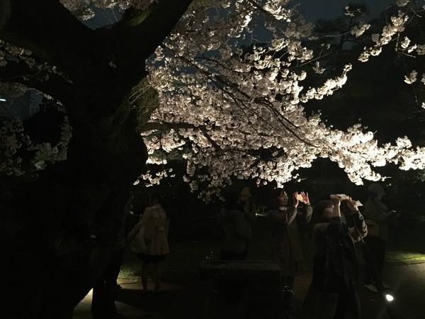 2ch:我拍了樱花的照片,来给个评价吧