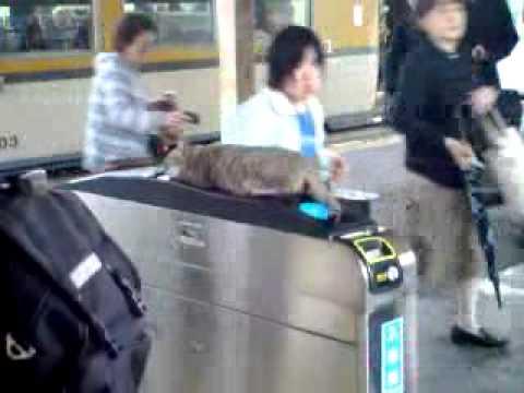 2ch:喵星人「好温暖喵~」喵咪跑到电车上,JR广岛站列车晚点19分钟喵