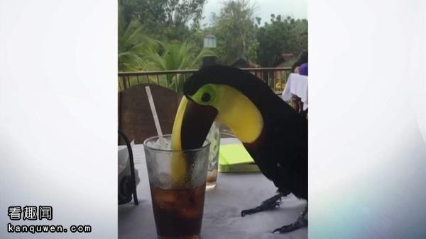 2ch:十万紧急!现在马上发现鸟的字符画给我!!!(…呕)