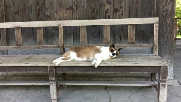 2ch:车站前有一只奇怪的猫www