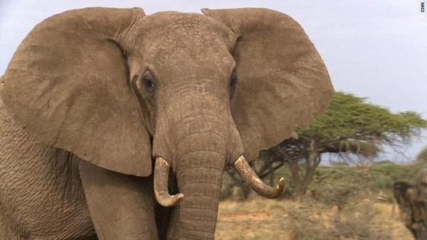 2ch:动物园大象「老子生气了象!(丢石头)」→游客死亡