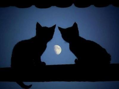2ch:对比较在意的学妹发了「今夜之月甚美」的短信www