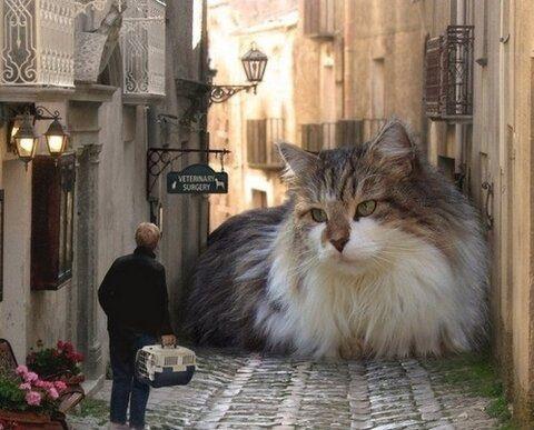 2ch:貓咪「好冷好冷好冷喔・・・對了!」
