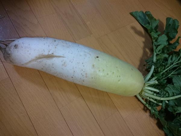 仓鼠速报:女高中生的自拍照太美于是用白蘿蔔作了試驗比较,结果・・・