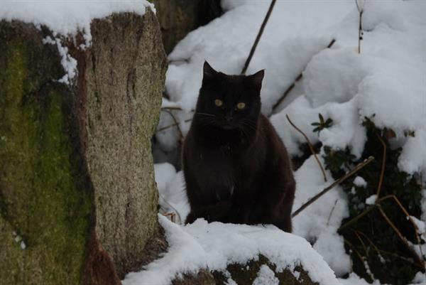 2ch:雪与猫,雪猫