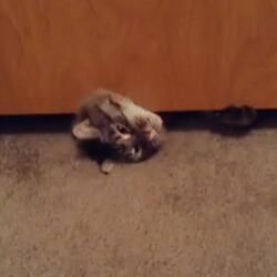 2ch:猫咪「门关上了…对了!」