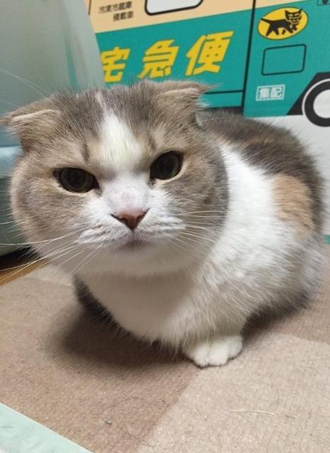 2ch:【悲报】猫,入侵了抓娃娃机