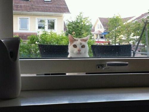 家猫骚扰邻居,邻居不胜其烦