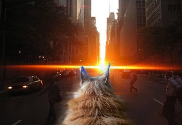 超感人!和狗狗最后几个月的生活