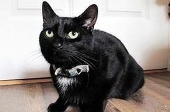 自家主人昏倒,宠物猫向邻居求助